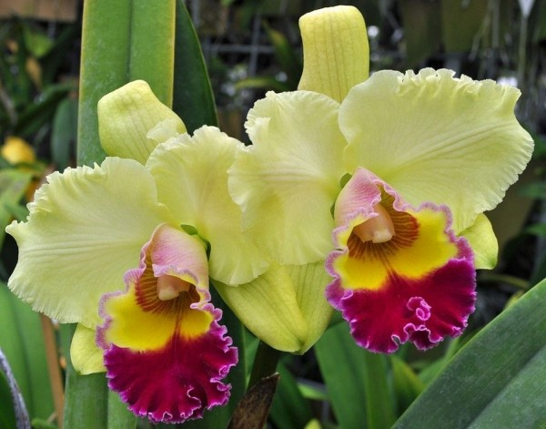 "Blc. Goldenzelle ""High Noon"""
