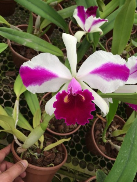 "Lc. Remo Prada ""Crown"""